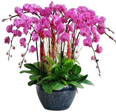 9 dallı mor orkide  Şırnak çiçek online çiçek siparişi