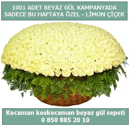 1001 adet beyaz gül sepeti özel kampanyada  Şırnak çiçekçi telefonları