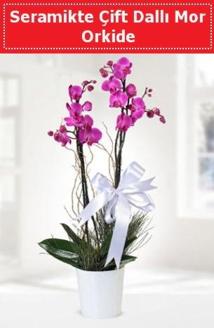 Seramikte Çift Dallı Mor Orkide  Şırnak çiçek servisi , çiçekçi adresleri