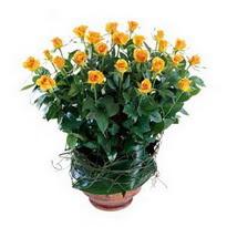 Şırnak anneler günü çiçek yolla  10 adet sari gül tanzim cam yada mika vazoda çiçek
