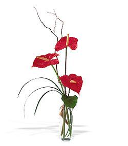Şırnak internetten çiçek siparişi  cam yada mika Vazoda 3 adet  antoryum