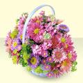 Şırnak İnternetten çiçek siparişi  bir sepet dolusu kir çiçegi  Şırnak çiçekçi telefonları