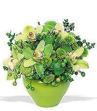 cam yada mika vazoda 5 adet orkide   Şırnak çiçek gönderme sitemiz güvenlidir