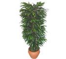 Şırnak internetten çiçek siparişi  Özel Mango 1,75 cm yüksekliginde