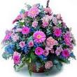 karisik mevsim kir çiçekleri  Şırnak çiçekçi telefonları