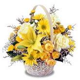 sadece sari çiçek sepeti   Şırnak çiçekçi telefonları