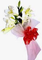 Şırnak çiçekçi mağazası  ince vazoda gerbera ve ayi