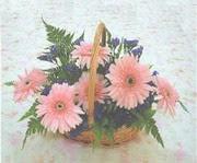 gerbera çiçeklerinde sepet   Şırnak çiçek satışı