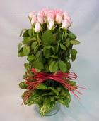 13 adet pembe gül silindirde   Şırnak çiçek satışı