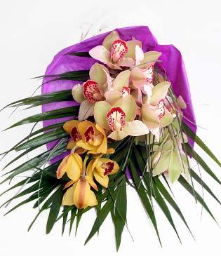 Şırnak anneler günü çiçek yolla  1 adet dal orkide buket halinde sunulmakta