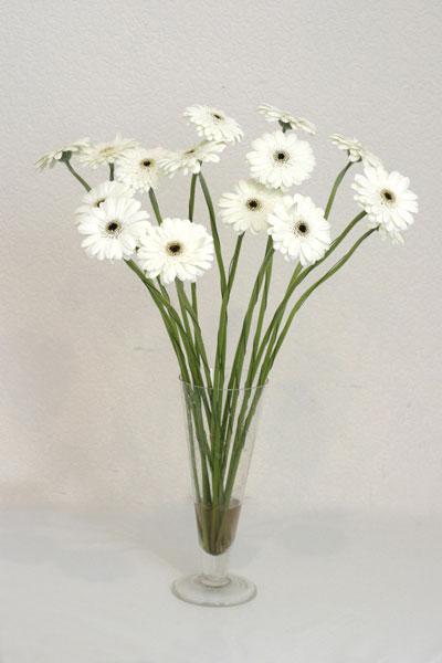 Şırnak yurtiçi ve yurtdışı çiçek siparişi  cam vazo içerisinde 17 adet sade gerbera