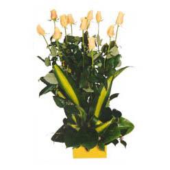12 adet beyaz gül aranjmani  Şırnak online çiçekçi , çiçek siparişi