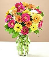 Şırnak kaliteli taze ve ucuz çiçekler  17 adet karisik gerbera