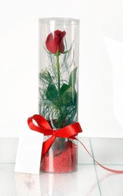 Şırnak çiçek satışı  Silindir vazoda tek kirmizi gül