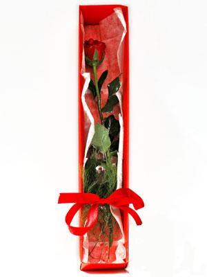 Şırnak İnternetten çiçek siparişi  1 adet kutuda gül