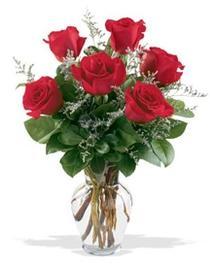 Şırnak çiçekçi telefonları  7 adet kirmizi gül cam yada mika vazoda sevenlere