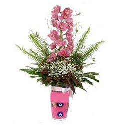 Şırnak internetten çiçek satışı  cam yada mika vazo içerisinde tek dal orkide çiçegi