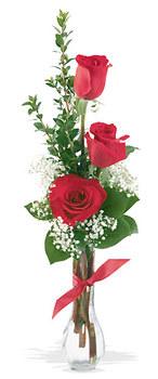 Şırnak anneler günü çiçek yolla  mika yada cam vazoda 3 adet kirmizi gül