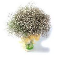 Şırnak yurtiçi ve yurtdışı çiçek siparişi  cam yada mika vazo içerisinde cipsofilya demeti