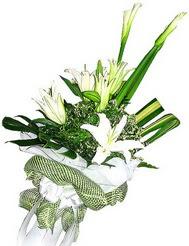 Şırnak çiçek yolla , çiçek gönder , çiçekçi   3 dal kazablanka çiçegi ve yesillikler