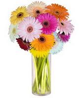 Şırnak cicek , cicekci  Farkli renklerde 15 adet gerbera çiçegi