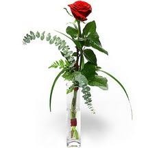Şırnak çiçek online çiçek siparişi  Sana deger veriyorum bir adet gül cam yada mika vazoda