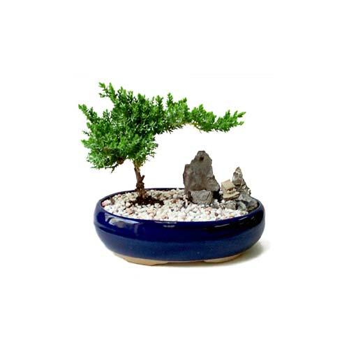 ithal bonsai saksi çiçegi  Şırnak çiçek , çiçekçi , çiçekçilik