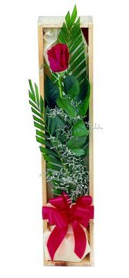 1 adet kutuda kirmizi gül  Şırnak çiçekçi telefonları