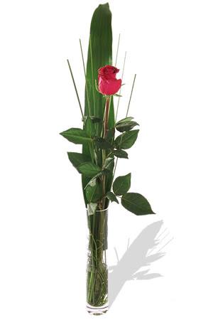 1 adet cam vazo içerisinde kirmizi gül  Şırnak çiçekçi mağazası