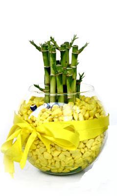 cam fanus içerisinde bambo  Şırnak çiçek siparişi vermek