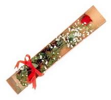 1 adet kirmizi gül  Şırnak ucuz çiçek gönder
