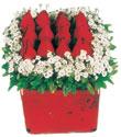 Şırnak çiçek , çiçekçi , çiçekçilik  Kare cam yada mika içinde kirmizi güller - anneler günü seçimi özel çiçek