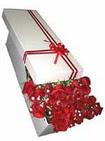 Şırnak ucuz çiçek gönder  11 adet 1.kalite magnum güller