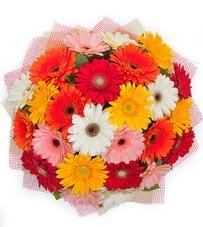 15 adet renkli gerbera buketi  Şırnak İnternetten çiçek siparişi