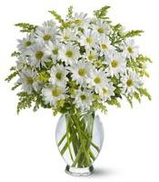 Vazo içerisinde beyaz krizantem çiçekleri  Şırnak çiçekçiler