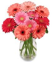 vazo içerisinde 13 adet gerbera çiçeği  Şırnak internetten çiçek siparişi