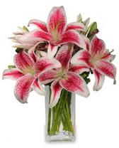 Vazo içerisinde 5 dal kazablanka çiçeği  Şırnak anneler günü çiçek yolla