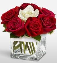 Tek aşkımsın çiçeği 8 kırmızı 1 beyaz gül  Şırnak hediye sevgilime hediye çiçek