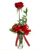 vazo içerisinde 1 adet kırmızı gül  Şırnak ucuz çiçek gönder