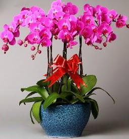 7 dallı mor orkide  Şırnak kaliteli taze ve ucuz çiçekler