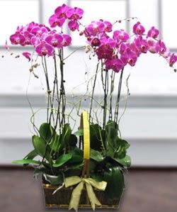 4 dallı mor orkide  Şırnak çiçek yolla , çiçek gönder , çiçekçi