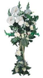 Şırnak yurtiçi ve yurtdışı çiçek siparişi  antoryumlarin büyüsü özel
