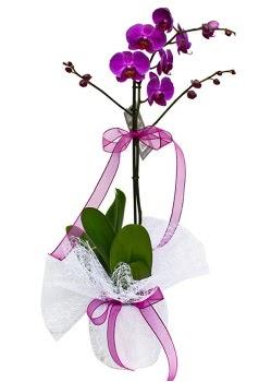 Tek dallı mor orkide  Şırnak ucuz çiçek gönder