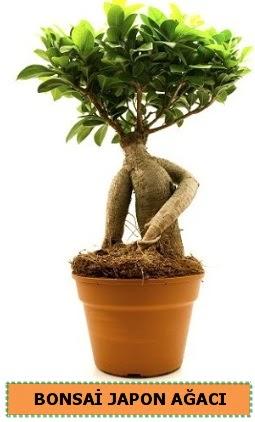 Bonsai japon ağacı satışı  Şırnak güvenli kaliteli hızlı çiçek