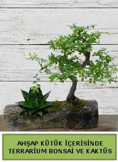 Ahşap kütük bonsai kaktüs teraryum  Şırnak cicek , cicekci