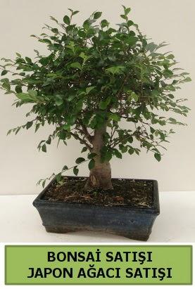 Minyatür bonsai japon ağacı satışı  Şırnak çiçekçi telefonları