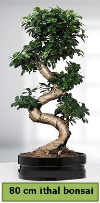 80 cm özel saksıda bonsai bitkisi  Şırnak ucuz çiçek gönder