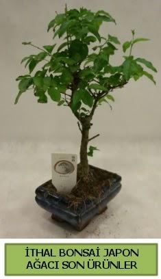 İthal bonsai japon ağacı bitkisi  Şırnak çiçek mağazası , çiçekçi adresleri