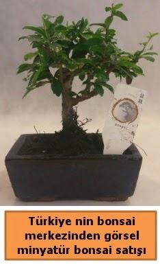 Japon ağacı bonsai satışı ithal görsel  Şırnak çiçek satışı