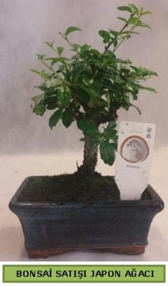 Minyatür bonsai ağacı satışı  Şırnak çiçek , çiçekçi , çiçekçilik
